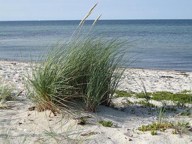 Ostsee Schlei
