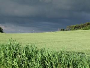 Kolby-Kaas-Wetter