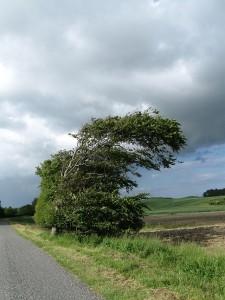 Kolby-Kaas-Wind